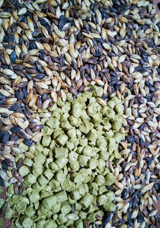 malt and barley for craft beer manufacturing on the table