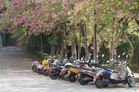bike parking: under Trees bike parking