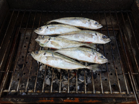 Grilled mackerel fish over the coals on a barbecue.