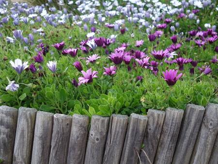 Flower garden Archivio Fotografico