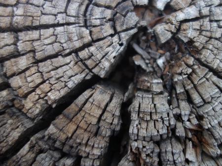 Cut tree trunk Archivio Fotografico