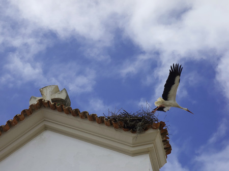 Stork flying over its nest on the roof of a church.
