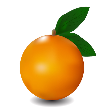 ripe: Ripe orange with leaves. Vector illustration.