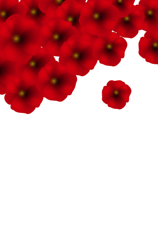 Background with Red Poppies isolated on white. Vector Illustration