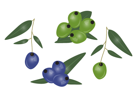 Black and green olives branch isolated on white background. Design for olive oil, cosmetics, health care products. Vector Illustration Illustration