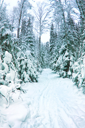 schneeberg: beautiful winter scenery, snow-covered spruce forest Stock Photo