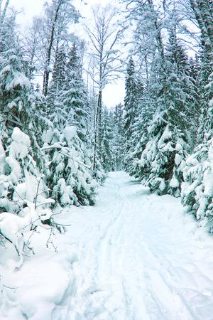 h�tte schnee: wundersch�ner Winterlandschaft, schneebedeckten Tannenwald