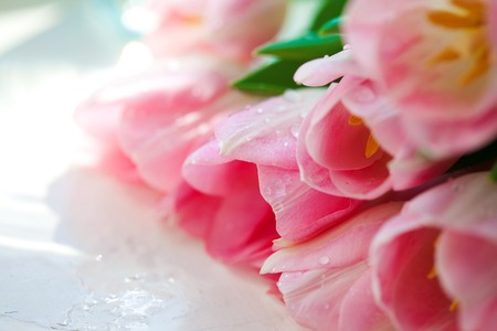 sharpness: pink flower tulips Close up, Small depth of sharpness Stock Photo