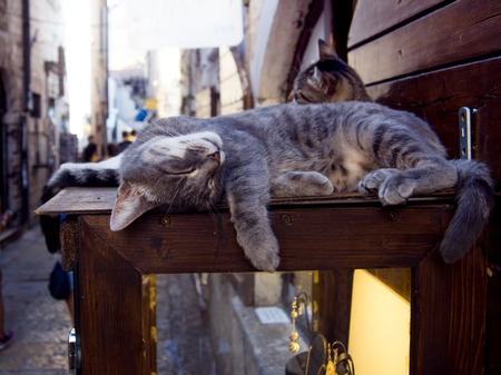 advances: Striped cats are sleeping on the storefront, tourist place