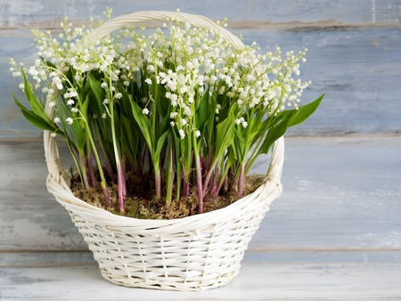multiple: Lilies in a white wicker basket. Fresh spring flowers as a gift.