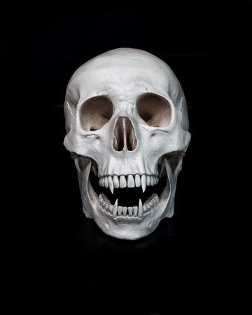 Vampiro muerto. Cráneo humano con colmillos de vampiro. Fondo negro. Espacio libre concepto sombrío Foto de archivo