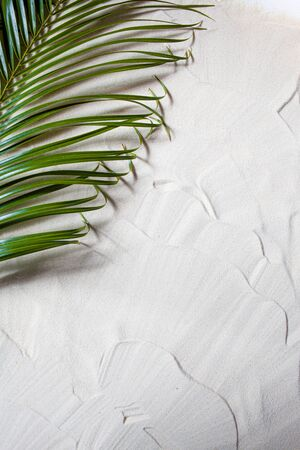Tropical beach. Green palm leaf lies on the white fine sand. Close-up, top view, desktop wallpaper. Copyspace.