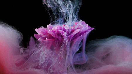 Flower under water and Splashes of colored ink, bright colors. Creative and color mix, abstract swirls of different colors on a black background