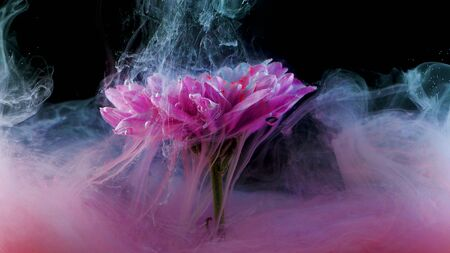 Flower under water and Splashes of colored ink, bright colors. Creative and color mix, abstract swirls of different colors on a black background Imagens