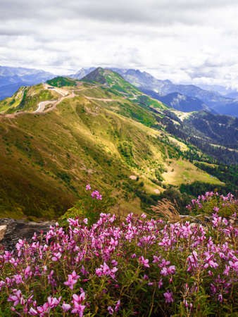 View from the top of the mountain valley, flowers and grass in the foreground. Beautiful mountain landscape. High-mountain massif, clouds over mountain peaks.