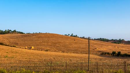 An orange, dry meadow in Portugal