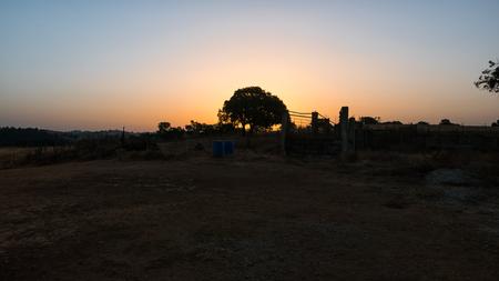An orange sunrise in Portugal behind a tree