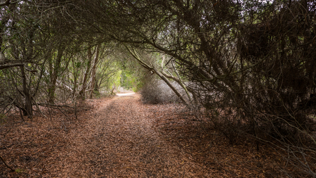 A path through a tunnel made out of trees in Portugal