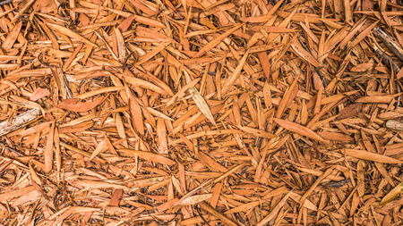 Brown and dry leaves scattered on the ground Stock Photo