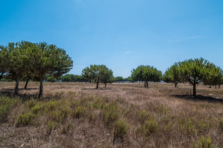 Trees growing in a meadow in Portugal