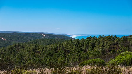 Ocean in the backgroud and trees in the foreground in Portugal