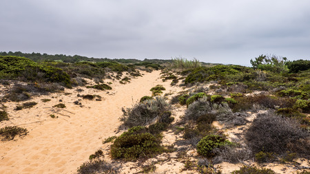 A narrow sand path along the ocean in Portugal Stock Photo