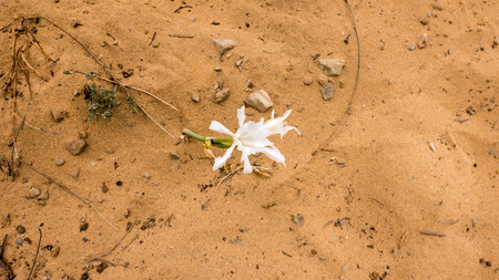 A flower growing out of a sand path in Portugal