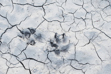 White cracked ground background texture with animals paws