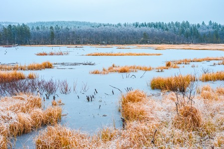 View of the frozen lake with a dry yellow grass and the wood on a background late fall day