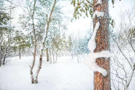 View of the frozen pine trees forest in the winter and the funny art of snow rabbit on a tree trunk Stockfoto