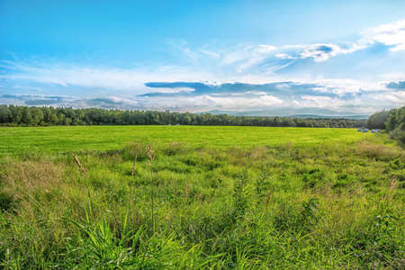 Field of green grass, blue sky and sun. Realistic photo of meadow field