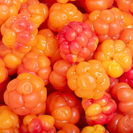 Background of right yellow and red ripe cloudberry