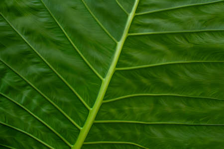 Close up of striped of tropical palm leaf, abstract green texture background