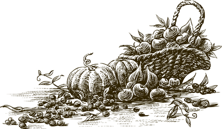 Vector drawing of the ripe fruit and vegetables.