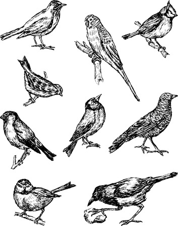 image of the various wild birds.