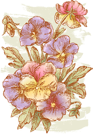 The vector drawing of a bouquet of pansy Illustration