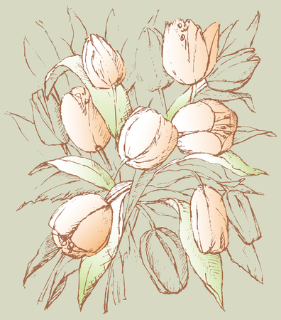 Vector sketch of the tulips bouquet. Illusztráció