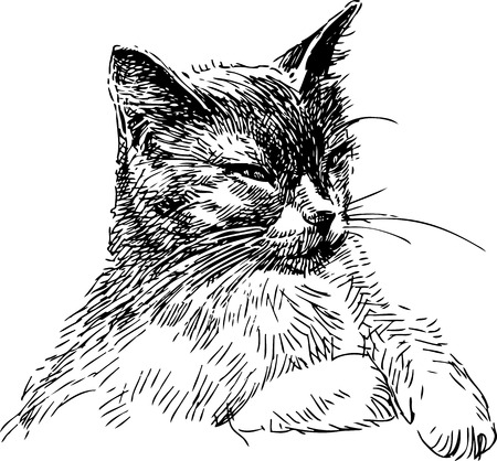 Vector sketch of a house cat