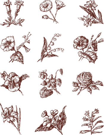 The vector drawings of the different flowers.