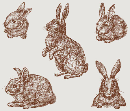 The vector image of the rabbits.