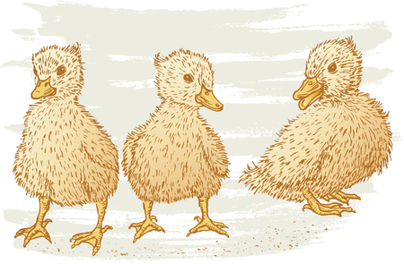 The vector drawing of the small ducklings.