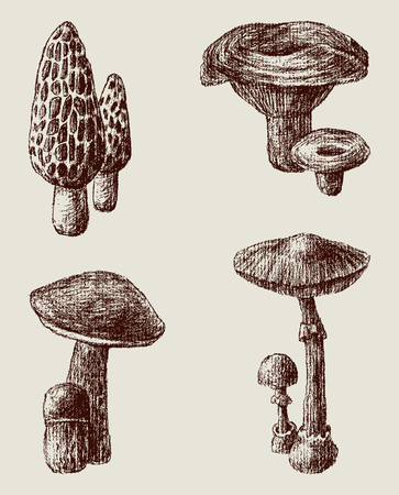 The vector drawings of the different mushrooms.