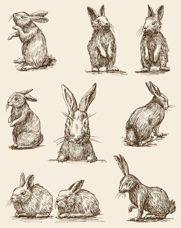 the vector drawings of the different vintage rabbits royalty free