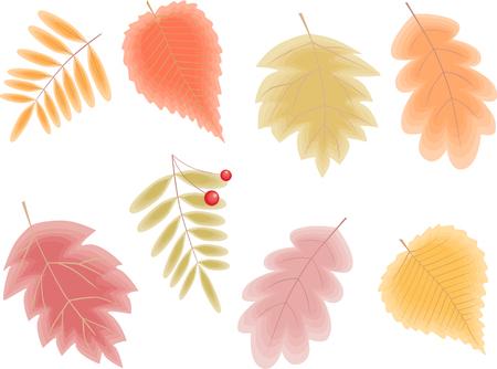 Het vectorbeeld van de verschillende herfstbladeren.