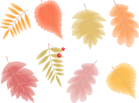 The vector image of the different autumn leaves. Illustration