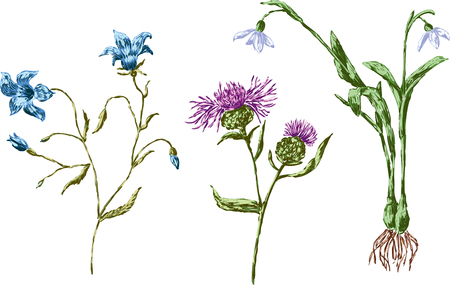 The vector drawings of the wildflowers.