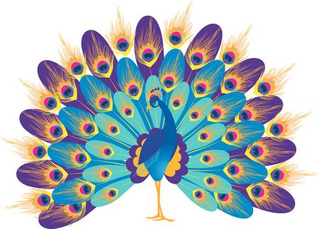 Het vectorbeeld van een blauwe decoratieve pauw. Stock Illustratie