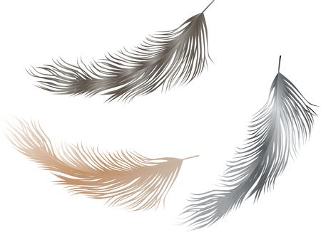 The vector image of three various birds feathers Illusztráció