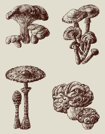 sponge mushroom: The vector drawings of a different mushrooms.
