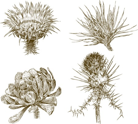 Vector drawings of the different subtropical plants.